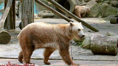 Lelőtték az állatkertben elszabadult medvét