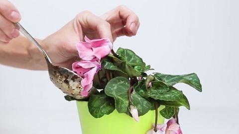 3 hozzávalós csodaszer, amivel visszahozhatod az életbe a növényeidet