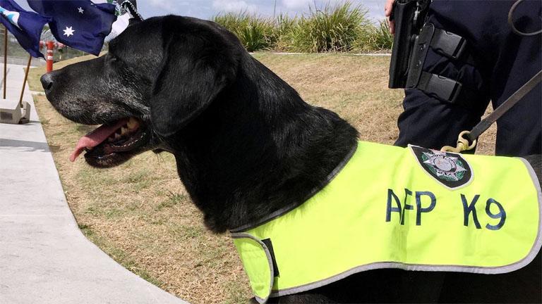 Louie - Forrás: Australian Federal Police