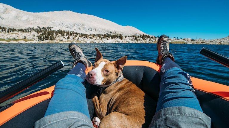 Így csinál belőled a kutyád egészségesebb és boldogabb embert a tudomány szerint