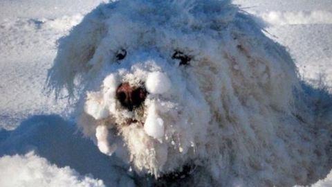 Íme a márciusi New York-i hóvihar képei