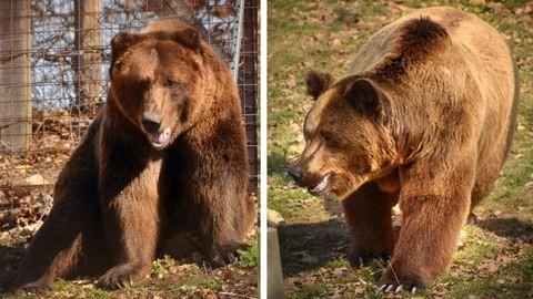 Két új szépség érkezett a Budakeszi Vadasparkba