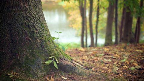 Eltűnt az erdőben a 4 éves kislány
