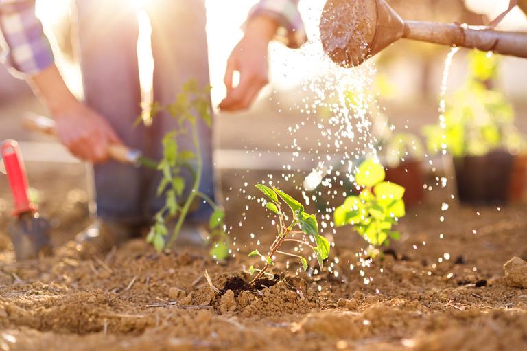 Kertépítés tavasszal: tippek, tanácsok, praktikák