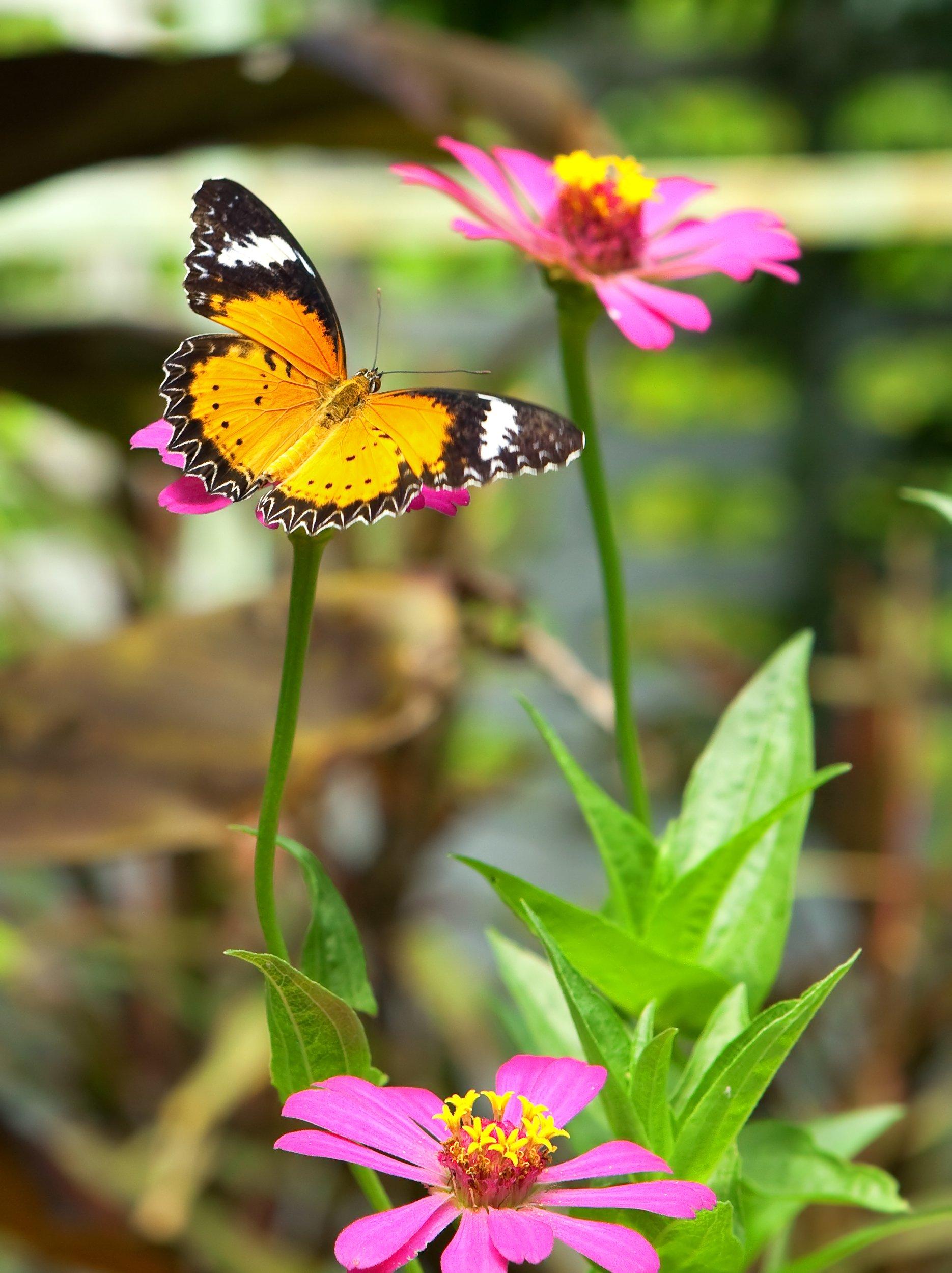 3 mód, ahogy pillangókat vonzhatsz a kertedbe