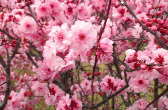 A 7 legszebb tavaszi virág