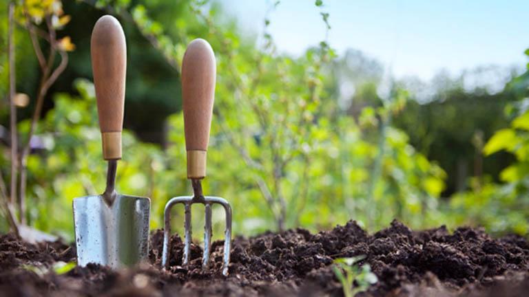 5 kertészkedési tipp kezdőknek