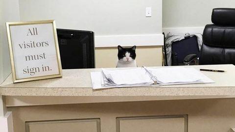 Idősek otthonában kapott állást a macska