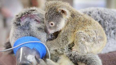 Daganata van a budapesti koalának
