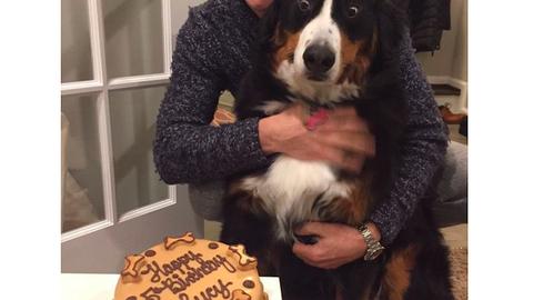 Ennél a kutyánál még senki nem várta jobban a szülinapi tortát – vicces fotó