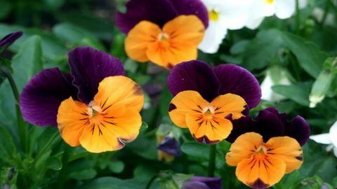 Indul az egy- és kétnyári növények szezonja