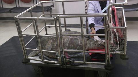 Kimúlt a pénzérmékkel etetett teknős