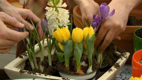 Tavaszi színorgia hagymásokkal