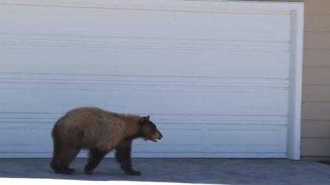 Felrobbantotta a netet a megrémült medve videója