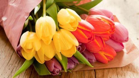 6 dolog, amit nem tudtál a tulipánról