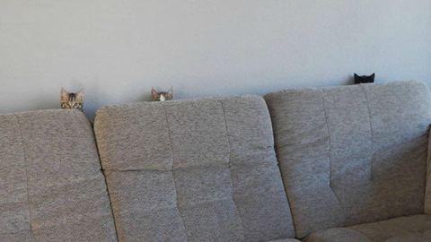 12 kép, ami bebizonyítja, hogy a macskák valójában titkos ügynökök