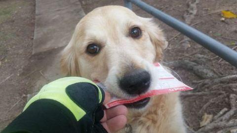 Odáig vagyunk a postásért, aki mindennap levelet ír a kutyának, aki imád levelet kapni