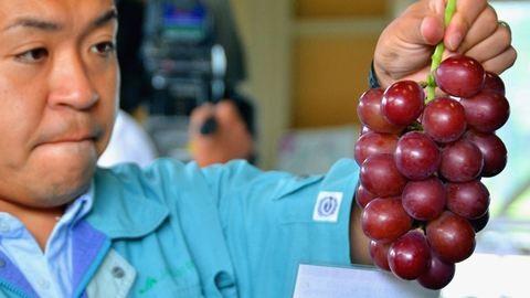 Hétmillió forintos dinnye, egymilliós eper – virágzik a luxusgyümölcs-biznisz Japánban