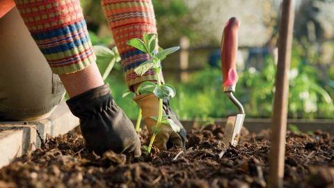 Amit az ágyáskészítésről tudni kell – Hozd ki a legtöbbet a kiskertedből!