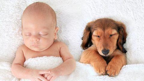 Ezek a képek bizonyítják, hogy a babák és az állatok a legjobb alvótársak