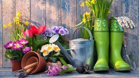Így borulhat virágba a balkonod és az előkerted!