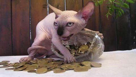 10 kép, ami bebizonyítja, hogy a macskák a Sátán szolgái:-)