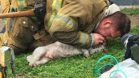 Napunk hőse a tűzoltó, aki 20 percen át élesztette újra a tűzből kimentett kutyát