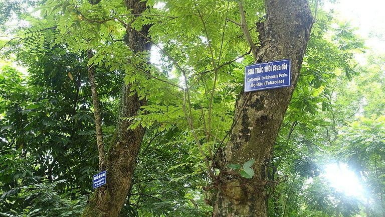 Fizetnél 300 milliót egy fa kivágásáért?