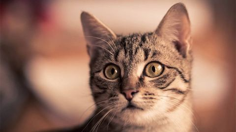 Tudományosan bizonyított: a macskák mégsem egoista bunkók