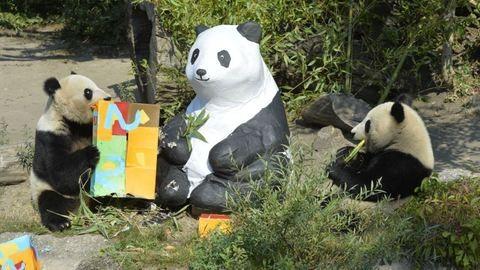 Sztárépítész tervez otthont a koppenhágai állatkert új pandáinak