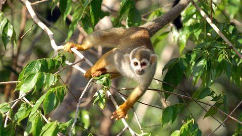 Majmok mentették meg az eltévedt turistát – videó