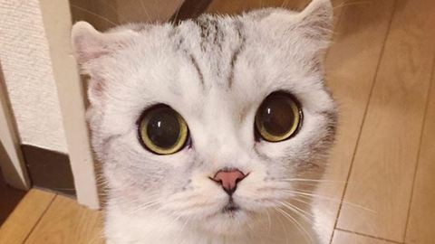 Ennek a tündéri cicának van a legtöbb követője az Instagramon
