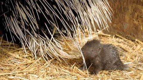 Hihetetlenül aranyos a Nyíregyházi Állatpark sülbébije