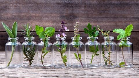 10 fűszernövény, amit beltéren is nevelhetsz