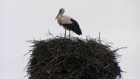 Emberek takarítják a gólyák fészkeit Nagykanizsán