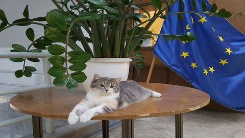 Nagy a baj: eltűnt Gödöllő polgármester-macskája