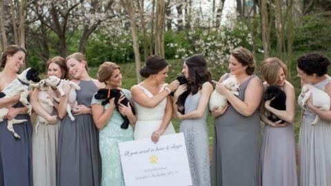 Elolvadsz: kiskutyákra cserélték a virágcsokrokat ezen az esküvőn