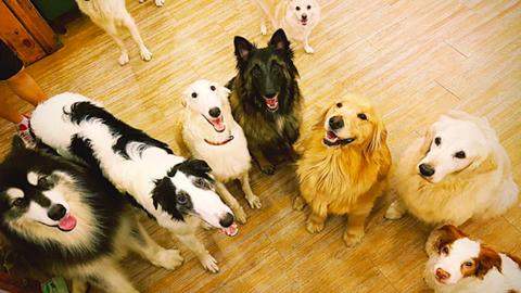 A kutyabarátok mennyországa ez a dél-koreai kávézó – cuki fotók
