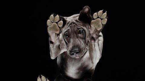10 fotó, ami bizonyítja, hogy a kutyák alulnézetből is imádni valóak