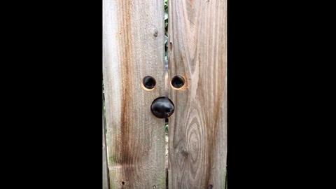 Zseniális módon segített a szomszédban élő nő a kíváncsi kutyának