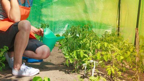 Aktuális munkák a tavaszi díszkertben