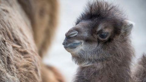 Ilyen cuki a Veszprémi Állatkert kistevéje