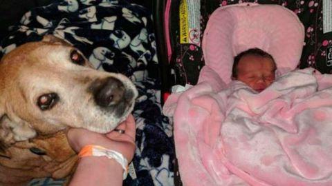 17 évesen fogadták örökbe kutyájukat – megérte első gyermeküket