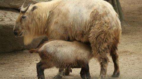 Igazi ritkaság született a Nyíregyházi Állatparkban