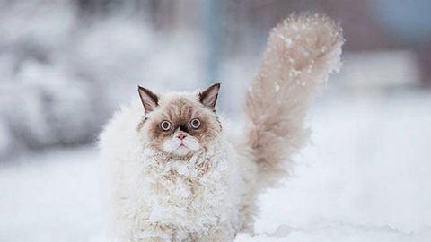 Mínuszokra, hóra is készülni kell a jövő héten