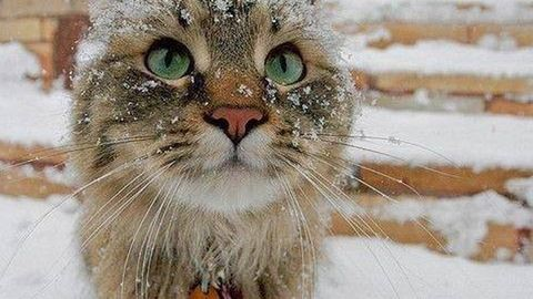 Havazott a Kékesen