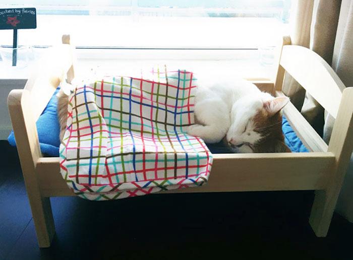 Macskaágyakkal lepte meg a menhelyet az IKEA