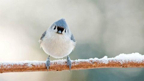 Meg kell menteni a madarakat az áprilisi hóeséstől?