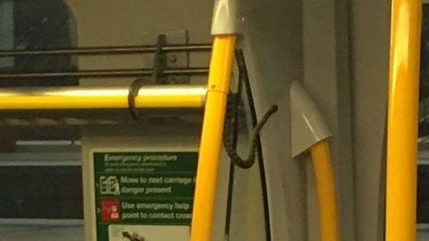 Ausztráliában még a vonaton is kígyók tekeregnek