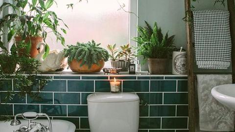 Növényekkel telipakolt fürdőszobáktól őrül meg a Pinterest